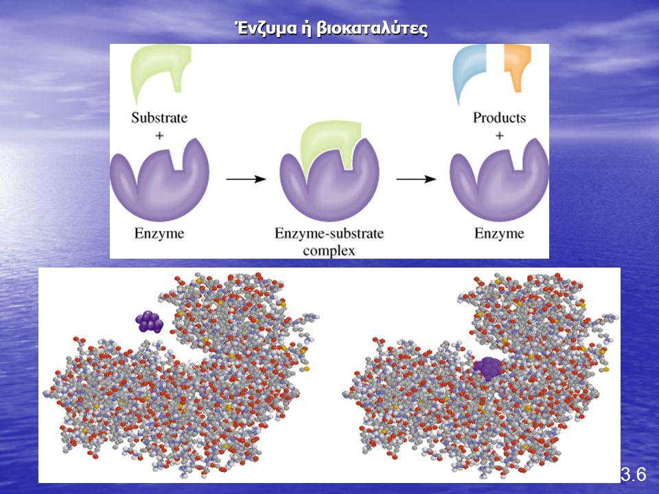 Ένζυμα ή βιοκαταλύτες 13.6