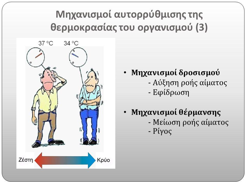 Μηχανισμοί αυτορρύθμισης της θερμοκρασίας του οργανισμού (3) Μηχανισμοί δροσισμού - Αύξηση ροής αίματος - Εφίδρωση Μηχανισμοί θέρμανσης - Μείωση ροής