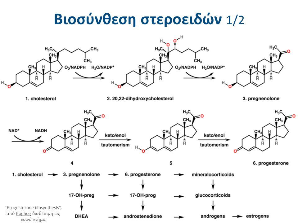"""Βιοσύνθεση στεροειδών 1/2 """"Progesterone biosynthesis"""", από Boghog διαθέσιμη ως κοινό κτήμαProgesterone biosynthesisBoghog"""
