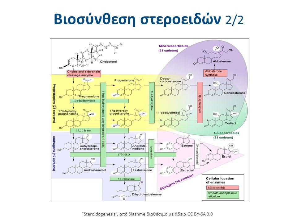 """Βιοσύνθεση στεροειδών 2/2 """"Steroidogenesis"""", από Slashme διαθέσιμο με άδεια CC BY-SA 3.0SteroidogenesisSlashmeCC BY-SA 3.0"""