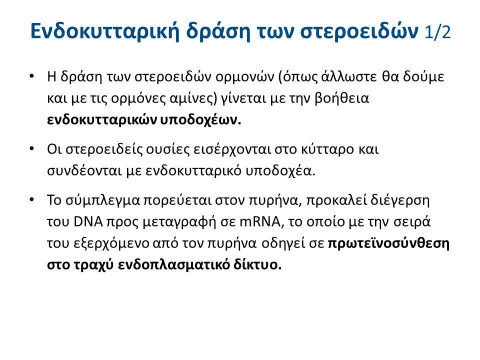 Ενδοκυτταρική δράση των στεροειδών 1/2 Η δράση των στεροειδών ορμονών (όπως άλλωστε θα δούμε και με τις ορμόνες αμίνες) γίνεται με την βοήθεια ενδοκυτ