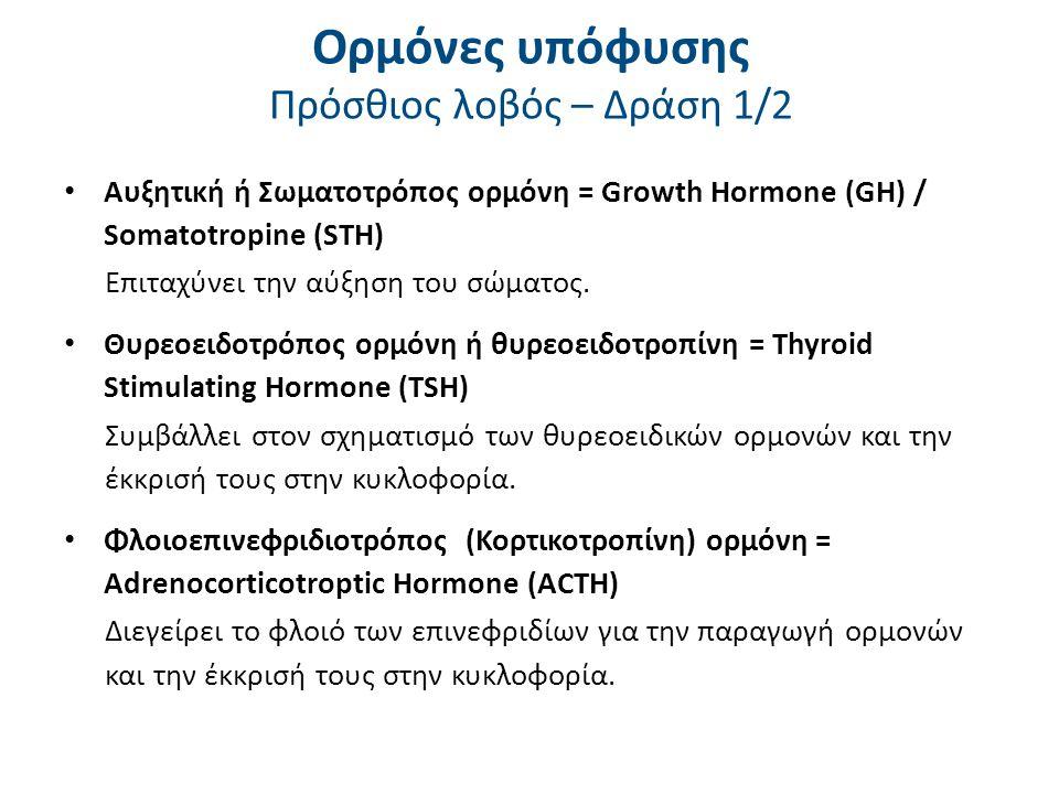 Ορμόνες υπόφυσης Πρόσθιος λοβός – Δράση 1/2 Αυξητική ή Σωματοτρόπος ορμόνη = Growth Hormone (GH) / Somatotropine (STH) Επιταχύνει την αύξηση του σώματ