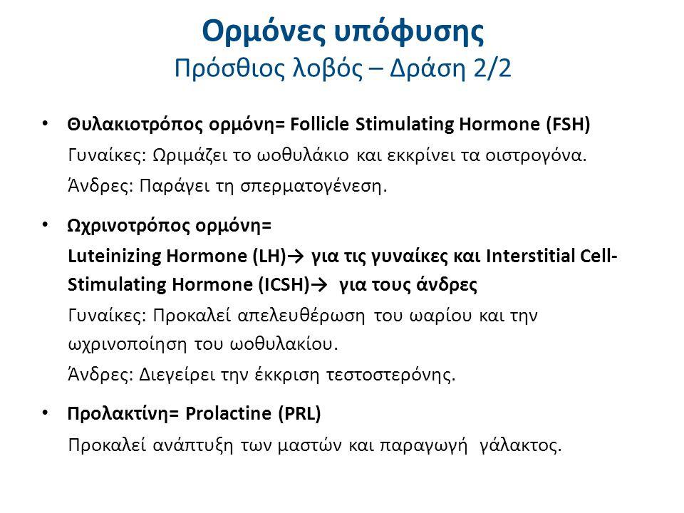 Ορμόνες υπόφυσης Πρόσθιος λοβός – Δράση 2/2 Θυλακιοτρόπος ορμόνη= Follicle Stimulating Hormone (FSH) Γυναίκες: Ωριμάζει το ωοθυλάκιο και εκκρίνει τα ο