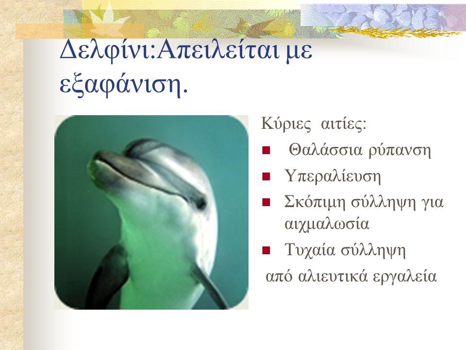 Δελφίνι:Απειλείται με εξαφάνιση.