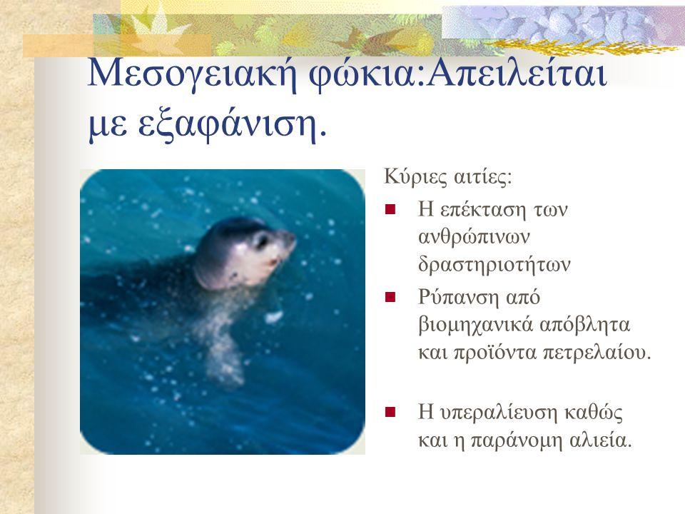 Χελώνα καρέτα- καρέτα: Απειλείται με εξαφάνιση Κύριες αιτίες: Η καταστροφή των βιοτόπων αναπαραγωγής του είδους.