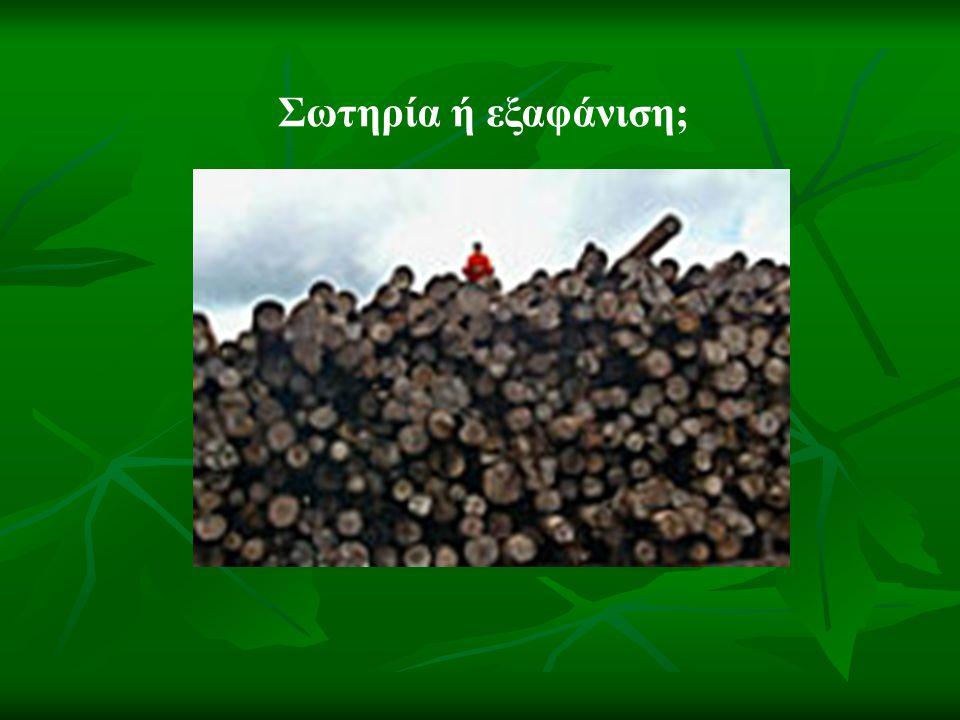 Ο Αμαζόνιος, ο τελευταίος μεγάλος πνεύμονας του πλανήτη απειλείται από την παράνομη υλοτομία.