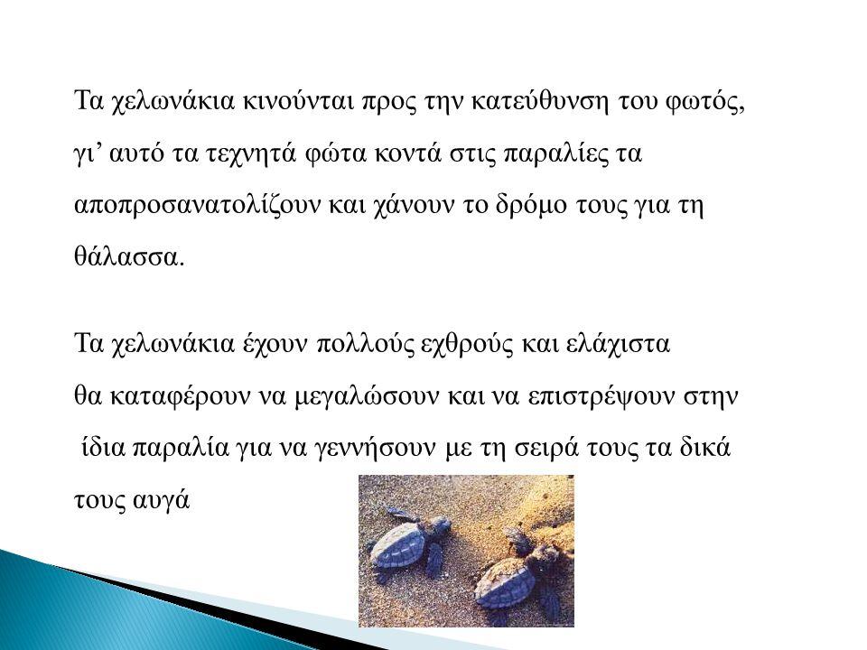 Η Καρέτα-Καρέτα απειλείται από: τη ρύπανση των θαλασσών την καταστροφή των παραλιών όπου γεννάει τα αυγά της την καταστροφή των περιοχών όπου βρίσκει την τροφή της από τα δίχτυα των ψαράδων τις πλαστικές σακούλες, αφού οι χελώνες τις τρώνε, νομίζοντας πως πρόκειται για τσούχτρες, με αποτέλεσμα να πεθαίνουν από ασφυξία και τέλος, κάποιες χελώνες τραυματίζονται, μερικές φορές θανάσιμα, από ταχύπλοα σκάφη που πλέουν κοντά στις παραλίες ωοτοκίας.