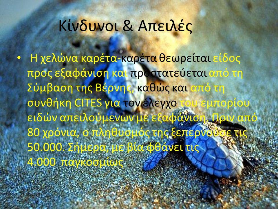 Κίνδυνοι & Απειλές Η χελώνα καρέτα-καρέτα θεωρείται είδος προς εξαφάνιση και προστατεύεται από τη Σύμβαση της Βέρνης, καθώς και από τη συνθήκη CΙΤΕS γ