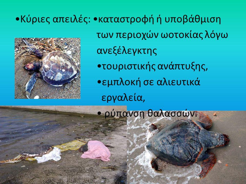 Κύριες απειλές: καταστροφή ή υποβάθμιση των περιοχών ωοτοκίας λόγω ανεξέλεγκτης τουριστικής ανάπτυξης, εμπλοκή σε αλιευτικά εργαλεία, ρύπανση θαλασσών
