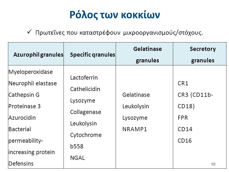 Ρόλος των κοκκίων Πρωτεΐνες που καταστρέφουν μικροοργανισμούς/στόχους. 10 Azurophil granulesSpecific qranules Gelatinase granules Secretory granules M