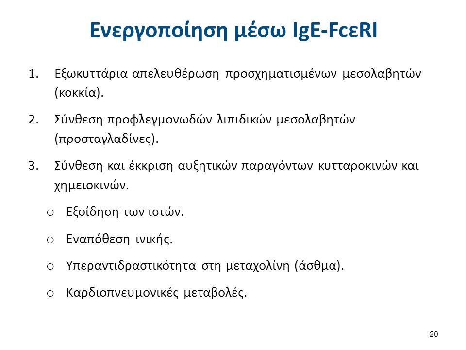 Ενεργοποίηση μέσω IgE-FcεRI 1.Εξωκυττάρια απελευθέρωση προσχηματισμένων μεσολαβητών (κοκκία). 2.Σύνθεση προφλεγμονωδών λιπιδικών μεσολαβητών (προσταγλ