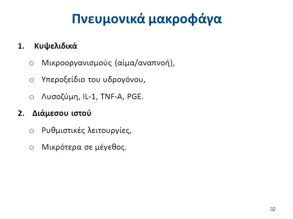 Πνευμονικά μακροφάγα 1.Κυψελιδικά o Μικροοργανισμούς (αίμα/αναπνοή), o Υπεροξείδιο του υδρογόνου, o Λυσοζύμη, IL-1, TNF-A, PGE. 2.Διάμεσου ιστού o Ρυθ