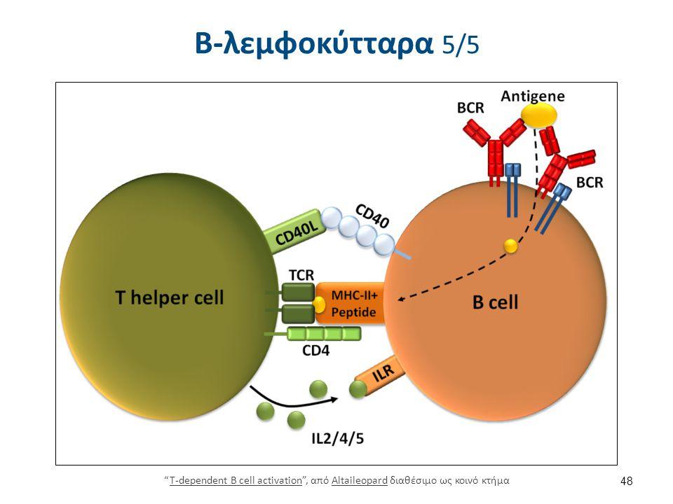 """Β-λεμφοκύτταρα 5/5 48 """"T-dependent B cell activation"""", από Altaileopard διαθέσιμο ως κοινό κτήμαT-dependent B cell activationAltaileopard"""