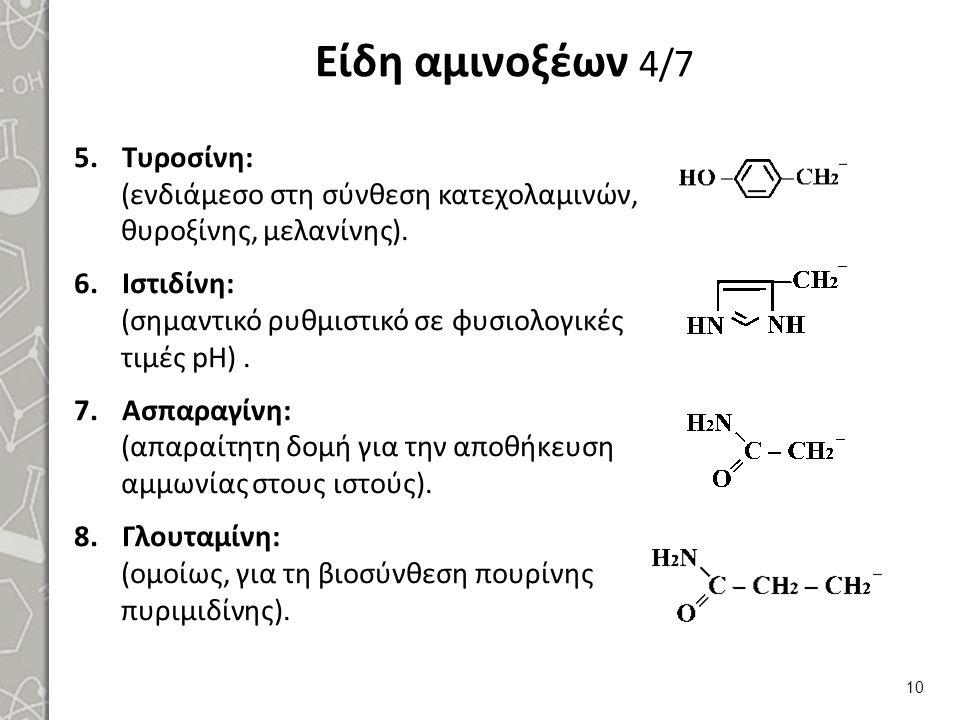 Είδη αμινοξέων 4/7 5.Τυροσίνη: (ενδιάμεσο στη σύνθεση κατεχολαμινών, θυροξίνης, μελανίνης). 6.Ιστιδίνη: (σημαντικό ρυθμιστικό σε φυσιολογικές τιμές pH
