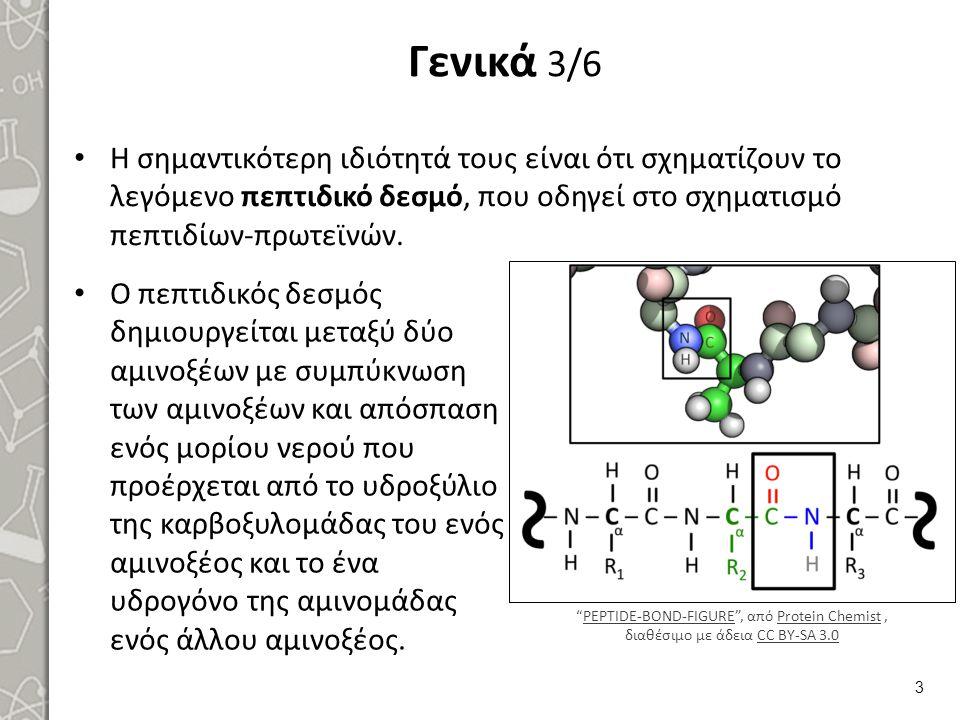 Γενικά 3/6 Η σημαντικότερη ιδιότητά τους είναι ότι σχηματίζουν το λεγόμενο πεπτιδικό δεσμό, που οδηγεί στο σχηματισμό πεπτιδίων-πρωτεϊνών. Ο πεπτιδικό