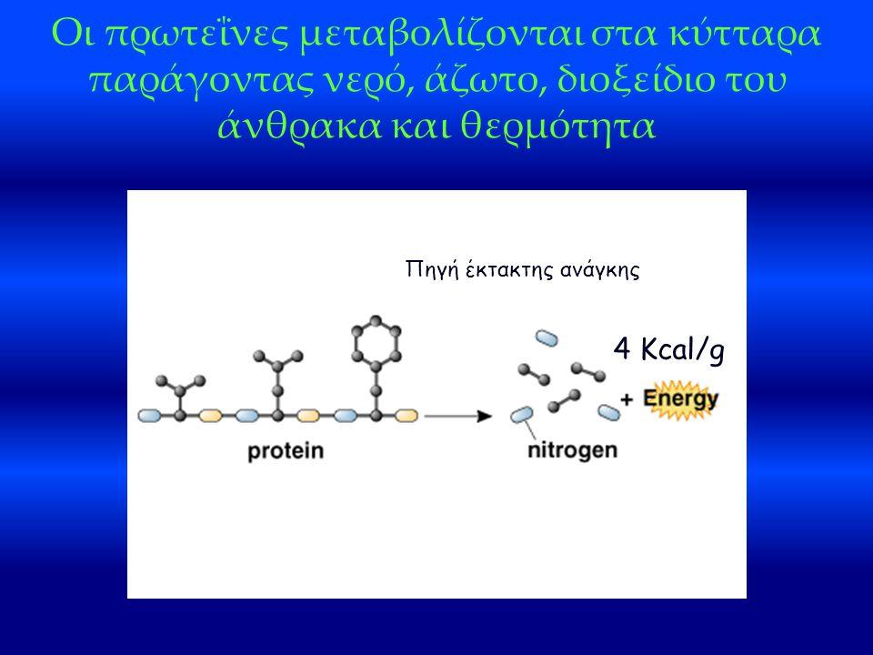 Οι πρωτεΐνες μεταβολίζονται στα κύτταρα παράγοντας νερό, άζωτο, διοξείδιο του άνθρακα και θερμότητα 4 Kcal/g Πηγή έκτακτης ανάγκης