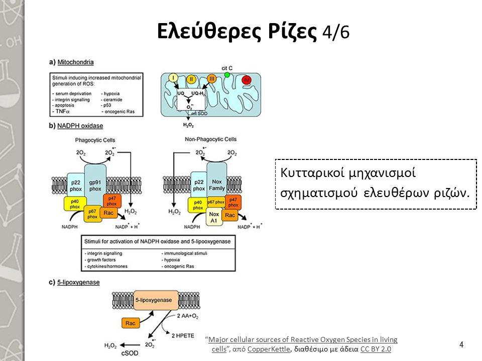 """Ελεύθερες Ρίζες 4/6 Κυτταρικοί μηχανισμοί σχηματισμού ελευθέρων ριζών. 4 """"Major cellular sources of Reactive Oxygen Species in living cells"""", από Copp"""
