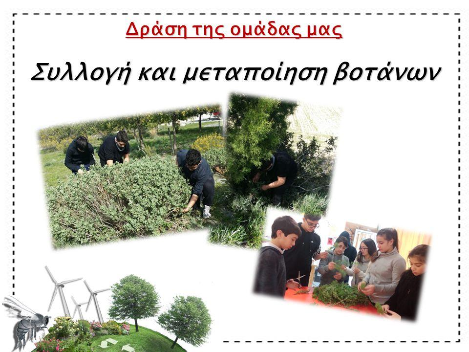 Δράση της ομάδας μας Συλλογή και μεταποίηση βοτάνων