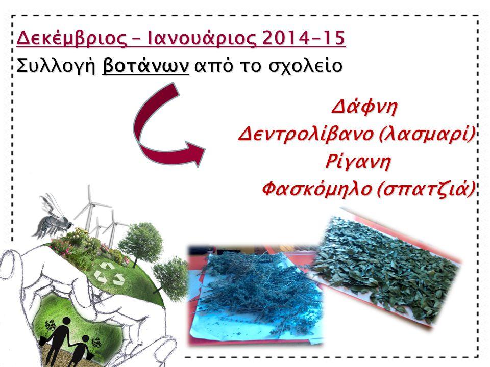 Δεκέμβριος – Ιανουάριος 2014-15 Συλλογή βοτάνων από το σχολείο Δάφνη Δάφνη Δεντρολίβανο (λασμαρί) Ρίγανη Ρίγανη Φασκόμηλο (σπατζιά)