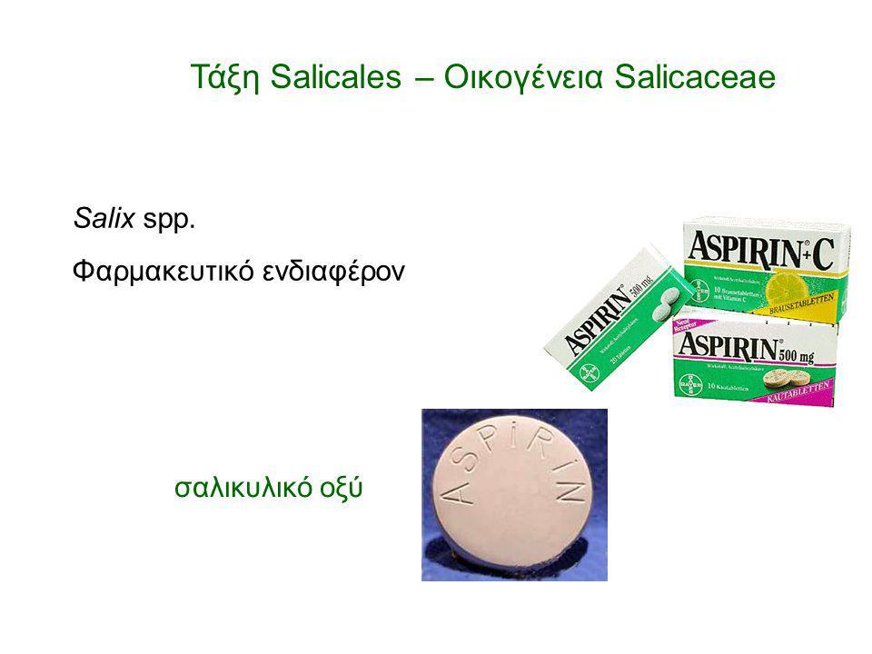 Salix spp. Φαρμακευτικό ενδιαφέρον σαλικυλικό οξύ Τάξη Salicales – Οικογένεια Salicaceae