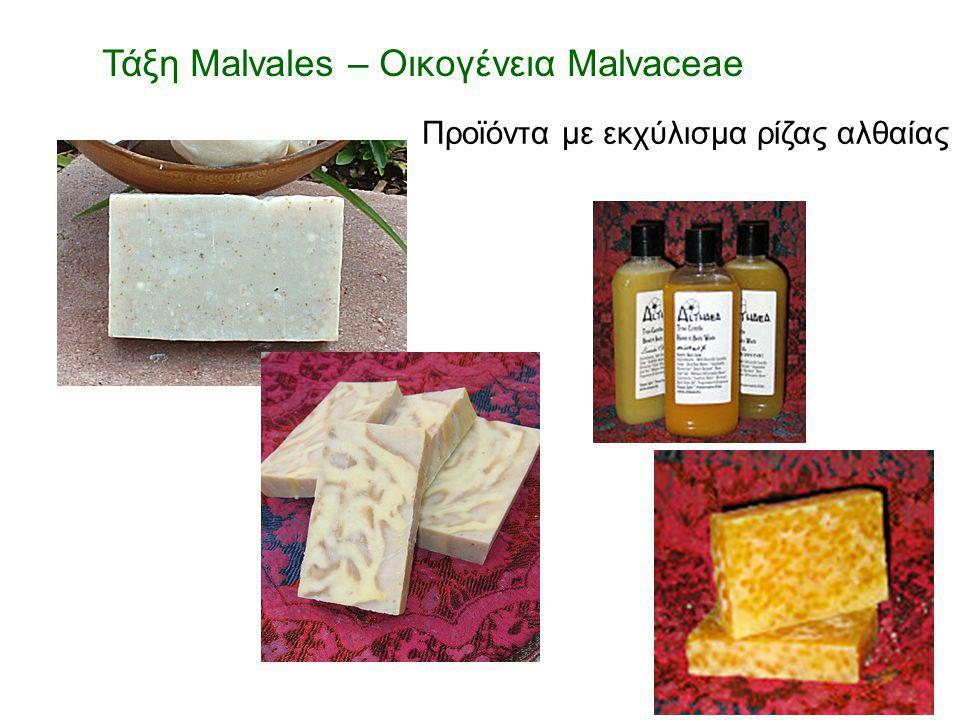 Προϊόντα με εκχύλισμα ρίζας αλθαίας Τάξη Malvales – Οικογένεια Malvaceae