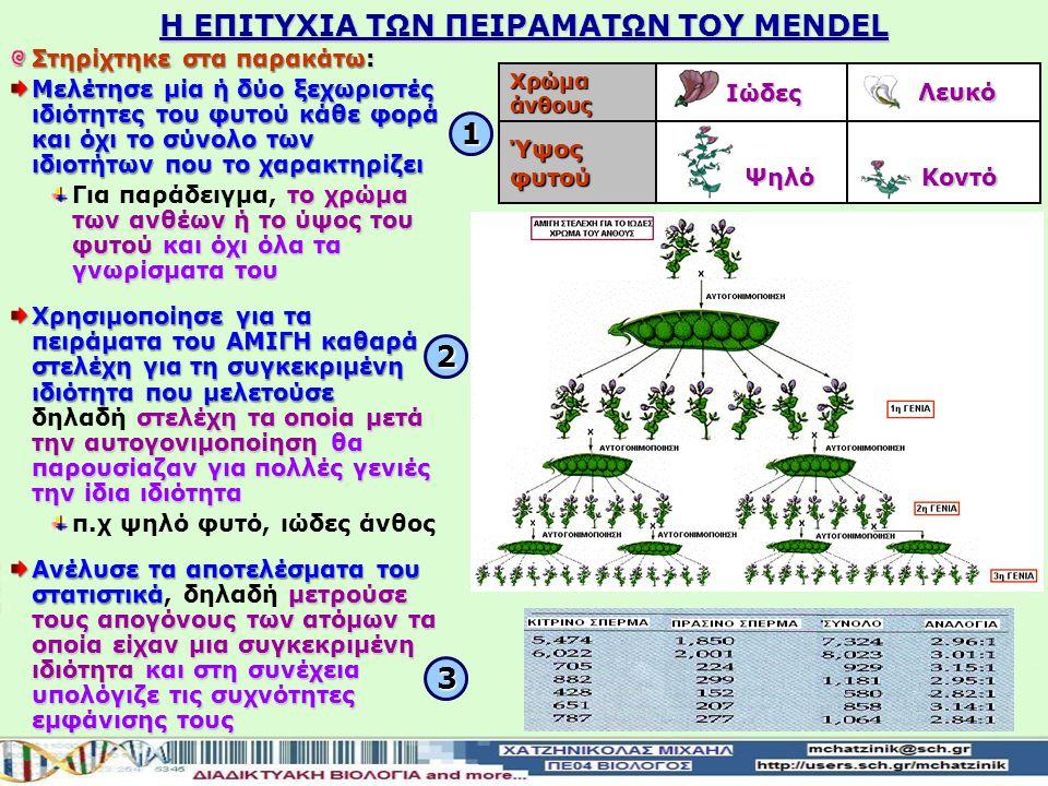 Η ΕΠΙΤΥΧΙΑ ΤΩΝ ΠΕΙΡΑΜΑΤΩΝ TOY MENDEL Στηρίχτηκε στα παρακάτω: Μελέτησε μία ή δύο ξεχωριστές ιδιότητες του φυτού κάθε φορά και όχι το σύνολο των ιδιοτήτων που το χαρακτηρίζει το χρώμα των ανθέων ή το ύψος του φυτού και όχι όλα τα γνωρίσματα του Για παράδειγμα, το χρώμα των ανθέων ή το ύψος του φυτού και όχι όλα τα γνωρίσματα του Χρησιμοποίησε για τα πειράματα του ΑΜΙΓΗ καθαρά στελέχη για τη συγκεκριμένη ιδιότητα που μελετούσε στελέχη τα οποία μετά την αυτογονιμοποίηση θα παρουσίαζαν για πολλές γενιές την ίδια ιδιότητα Χρησιμοποίησε για τα πειράματα του ΑΜΙΓΗ καθαρά στελέχη για τη συγκεκριμένη ιδιότητα που μελετούσε δηλαδή στελέχη τα οποία μετά την αυτογονιμοποίηση θα παρουσίαζαν για πολλές γενιές την ίδια ιδιότητα π.χ ψηλό φυτό, ιώδες άνθος Ανέλυσε τα αποτελέσματα του στατιστικάμετρούσε τους απογόνους των ατόμων τα οποία είχαν μια συγκεκριμένη ιδιότητακαι στη συνέχεια υπολόγιζε τις συχνότητες εμφάνισης τους Ανέλυσε τα αποτελέσματα του στατιστικά, δηλαδή μετρούσε τους απογόνους των ατόμων τα οποία είχαν μια συγκεκριμένη ιδιότητα και στη συνέχεια υπολόγιζε τις συχνότητες εμφάνισης τους Λευκό Λευκό Ιώδες Ιώδες Χρώμα άνθους Κοντό Κοντό Ψηλό Ψηλό Ύψος φυτού 3 2 1