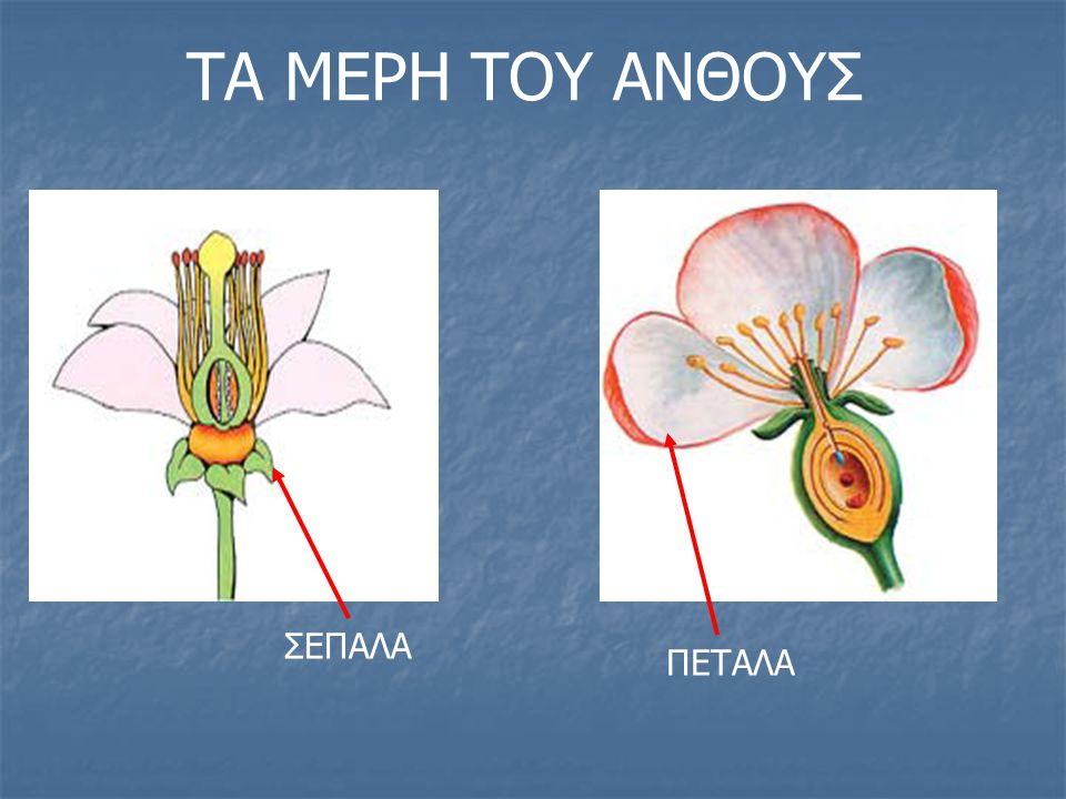 Ένας γυρεόκοκκος λεμονιάς μεταφέρεται στο στίγμα του υπέρου ενός άνθους μιας άλλης λεμονιάς, όπως φαίνεται στο πιο κάτω σχήμα: Πώς ονομάζεται το είδος αυτό της επικονίασης;