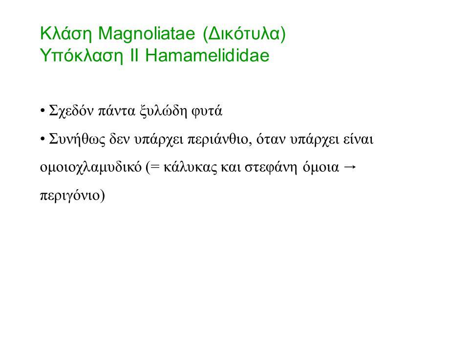 Σχεδόν πάντα ξυλώδη φυτά Συνήθως δεν υπάρχει περιάνθιο, όταν υπάρχει είναι ομοιοχλαμυδικό (= κάλυκας και στεφάνη όμοια → περιγόνιο) Κλάση Magnoliatae