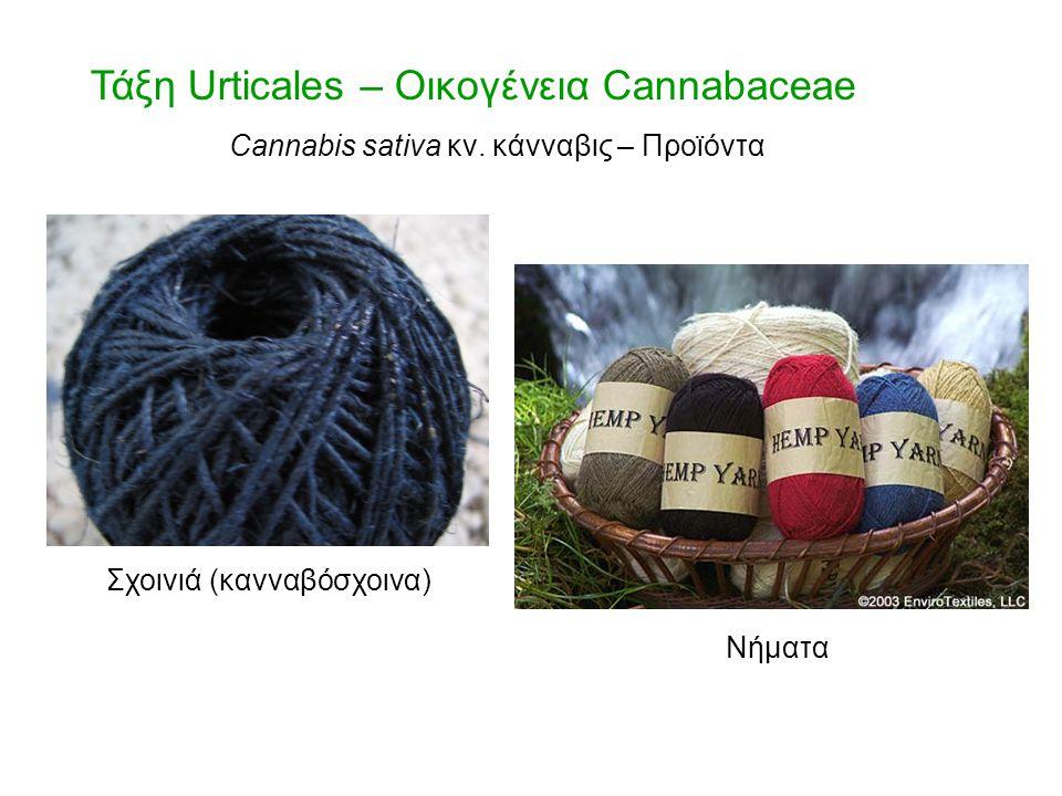 Τάξη Urticales – Οικογένεια Cannabaceae Σχοινιά (κανναβόσχοινα) Νήματα Cannabis sativa κν. κάνναβις – Προϊόντα
