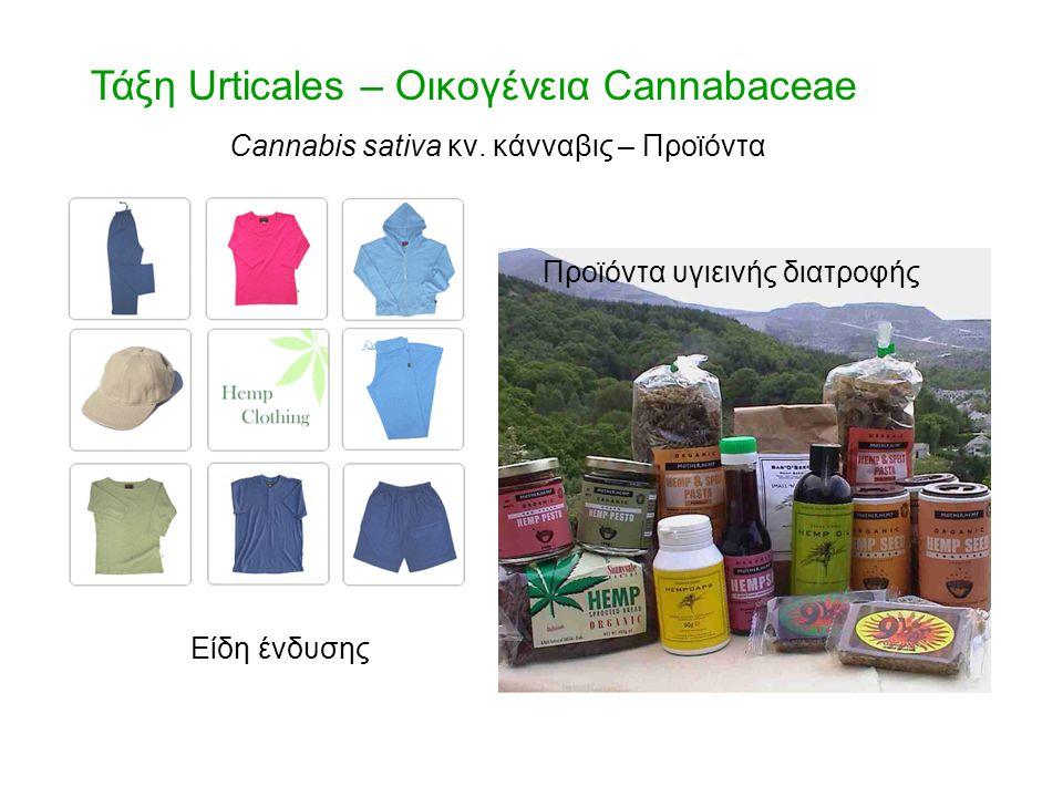 Τάξη Urticales – Οικογένεια Cannabaceae Cannabis sativa κν. κάνναβις – Προϊόντα Είδη ένδυσης Προϊόντα υγιεινής διατροφής