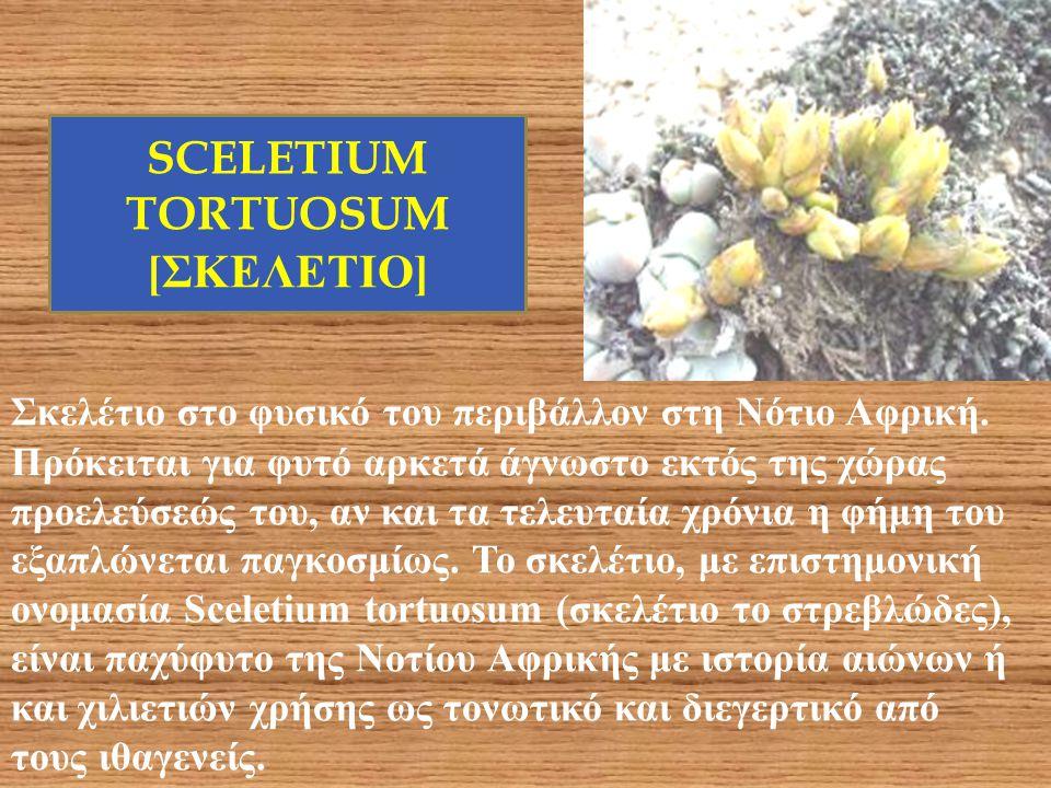 Σκελέτιο στο φυσικό του περιβάλλον στη Νότιο Αφρική. Πρόκειται για φυτό αρκετά άγνωστο εκτός της χώρας προελεύσεώς του, αν και τα τελευταία χρόνια η φ