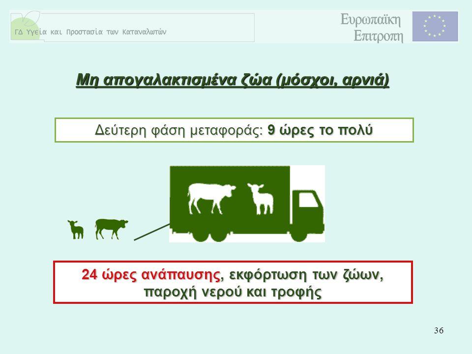 36 Μη απογαλακτισμένα ζώα (μόσχοι, αρνιά) Δεύτερη φάση μεταφοράς: 9 ώρες το πολύ 24 ώρες ανάπαυσης, εκφόρτωση των ζώων, παροχή νερού και τροφής