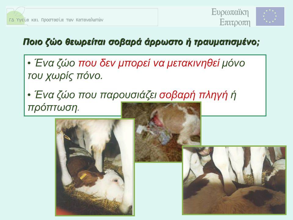 8 Ένα ζώο που δεν μπορεί να μετακινηθεί μόνο του χωρίς πόνο. Ένα ζώο που παρουσιάζει σοβαρή πληγή ή πρόπτωση. Ποιο ζώο θεωρείται σοβαρά άρρωστο ή τραυ