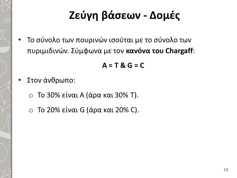 Ζεύγη βάσεων - Δομές Το σύνολο των πουρινών ισούται με το σύνολο των πυριμιδινών. Σύμφωνα με τον κανόνα του Chargaff: Α = Τ & G = C Στον άνθρωπο: o Το