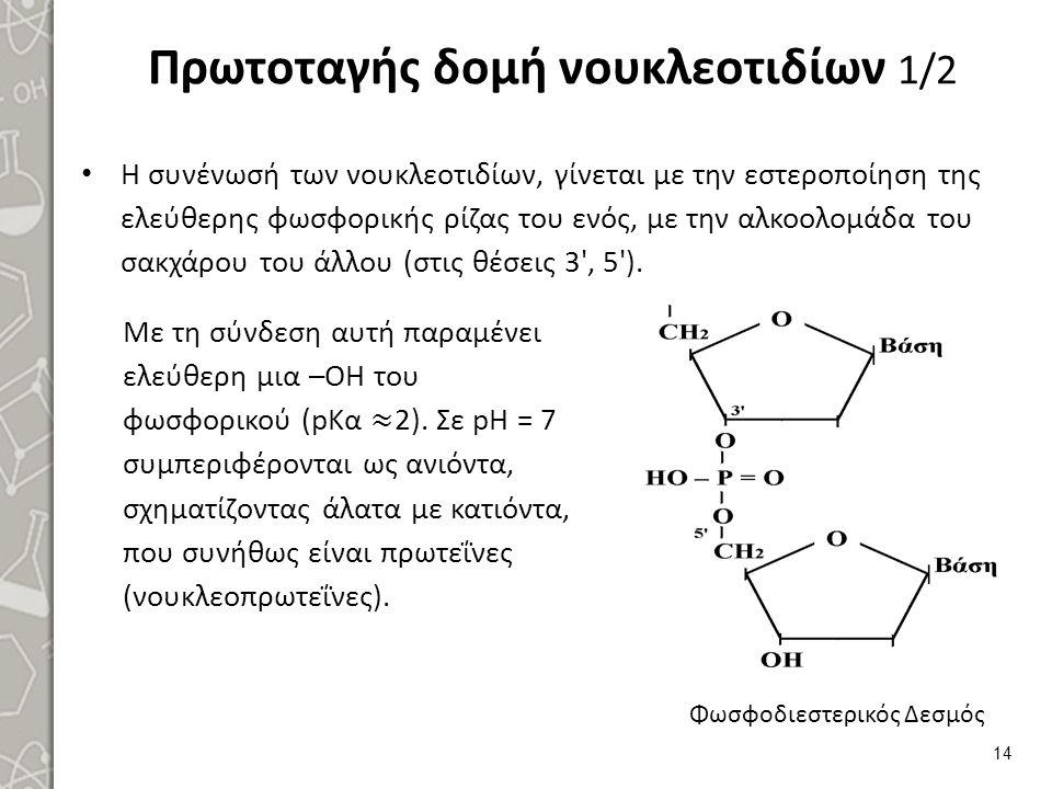 Πρωτοταγής δομή νουκλεοτιδίων 1/2 Η συνένωσή των νουκλεοτιδίων, γίνεται με την εστεροποίηση της ελεύθερης φωσφορικής ρίζας του ενός, με την αλκοολομάδ