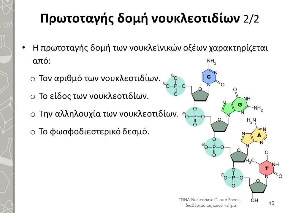 Πρωτοταγής δομή νουκλεοτιδίων 2/2 Η πρωτοταγής δομή των νουκλεϊνικών οξέων χαρακτηρίζεται από: o Τον αριθμό των νουκλεοτιδίων. o Το είδος των νουκλεοτ