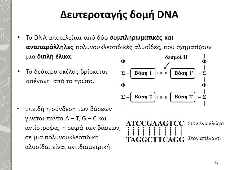 Δευτεροταγής δομή DNA Το DNA αποτελείται από δύο συμπληρωματικές και αντιπαράλληλες πολυνουκλεοτιδικές αλυσίδες, που σχηματίζουν μια διπλή έλικα. 18 Ε