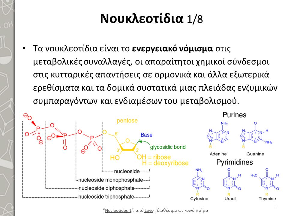 Νουκλεοτίδια 1/8 Τα νουκλεοτίδια είναι το ενεργειακό νόμισμα στις μεταβολικές συναλλαγές, οι απαραίτητοι χημικοί σύνδεσμοι στις κυτταρικές απαντήσεις