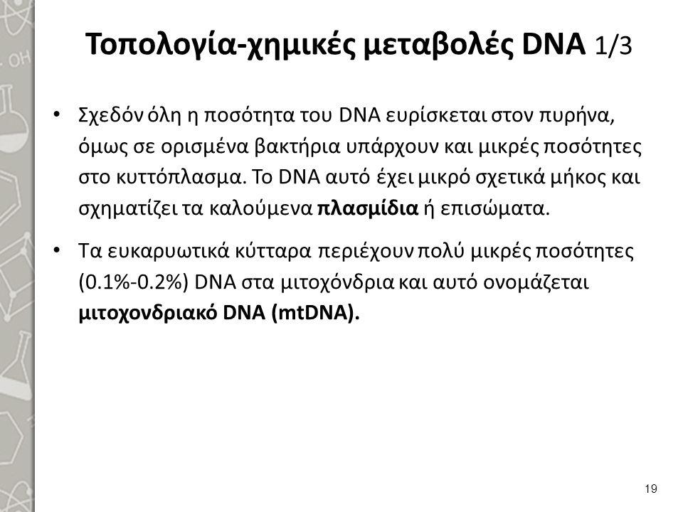 Τοπολογία-χημικές μεταβολές DNA 1/3 Σχεδόν όλη η ποσότητα του DΝΑ ευρίσκεται στον πυρήνα, όμως σε ορισμένα βακτήρια υπάρχουν και μικρές ποσότητες στο