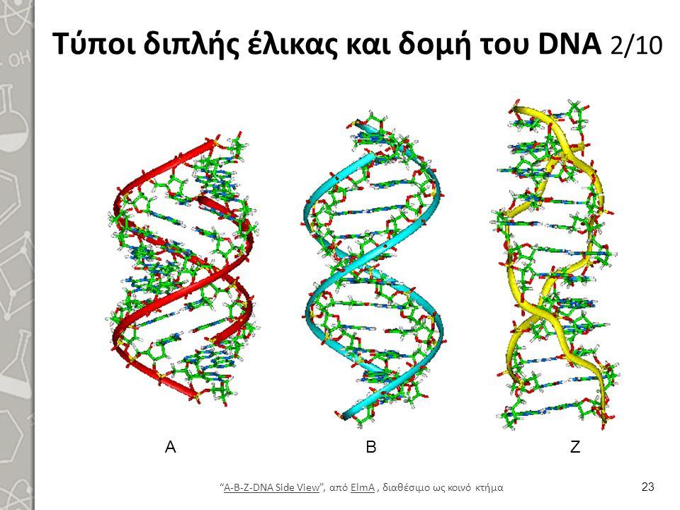 """Τύποι διπλής έλικας και δομή του DNA 2/10 23 """"A-B-Z-DNA Side View"""", από ElmA, διαθέσιμο ως κοινό κτήμαA-B-Z-DNA Side ViewElmA ΑΒΖ"""