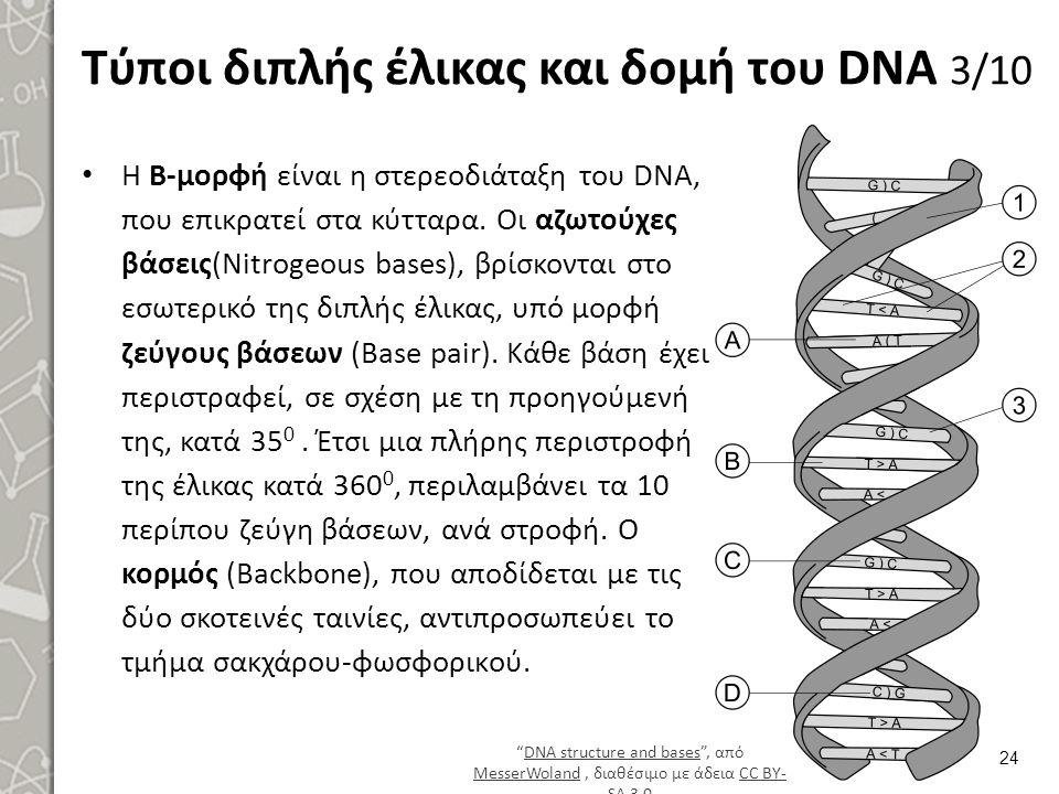 Τύποι διπλής έλικας και δομή του DNA 3/10 Η Β-μορφή είναι η στερεοδιάταξη του DNA, που επικρατεί στα κύτταρα. Οι αζωτούχες βάσεις(Nitrogeous bases), β