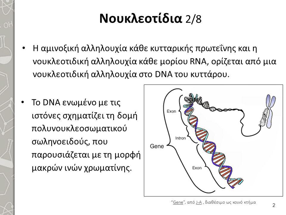 Νουκλεοτίδια 2/8 Η αμινοξική αλληλουχία κάθε κυτταρικής πρωτεΐνης και η νουκλεοτιδική αλληλουχία κάθε μορίου RNA, ορίζεται από μια νουκλεοτιδική αλληλ