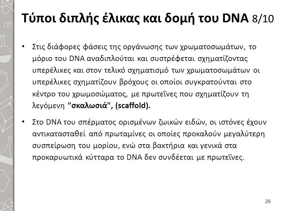 Τύποι διπλής έλικας και δομή του DNA 8/10 Στις διάφορες φάσεις της οργάνωσης των χρωματοσωμάτων, το μόριο του DΝΑ αναδιπλούται και συστρέφεται σχηματ