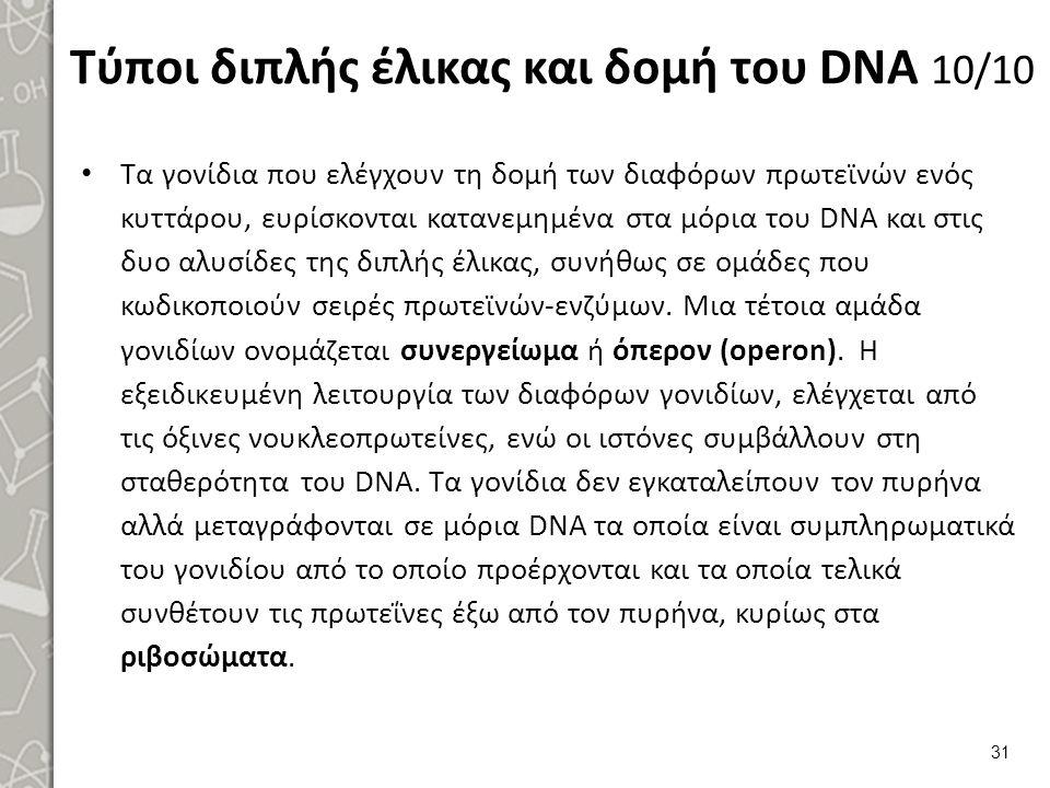 Τύποι διπλής έλικας και δομή του DNA 10/10 Τα γονίδια που ελέγχουν τη δομή των διαφόρων πρωτεϊνών ενός κυττάρου, ευρίσκονται κατανεμημένα στα μόρια το