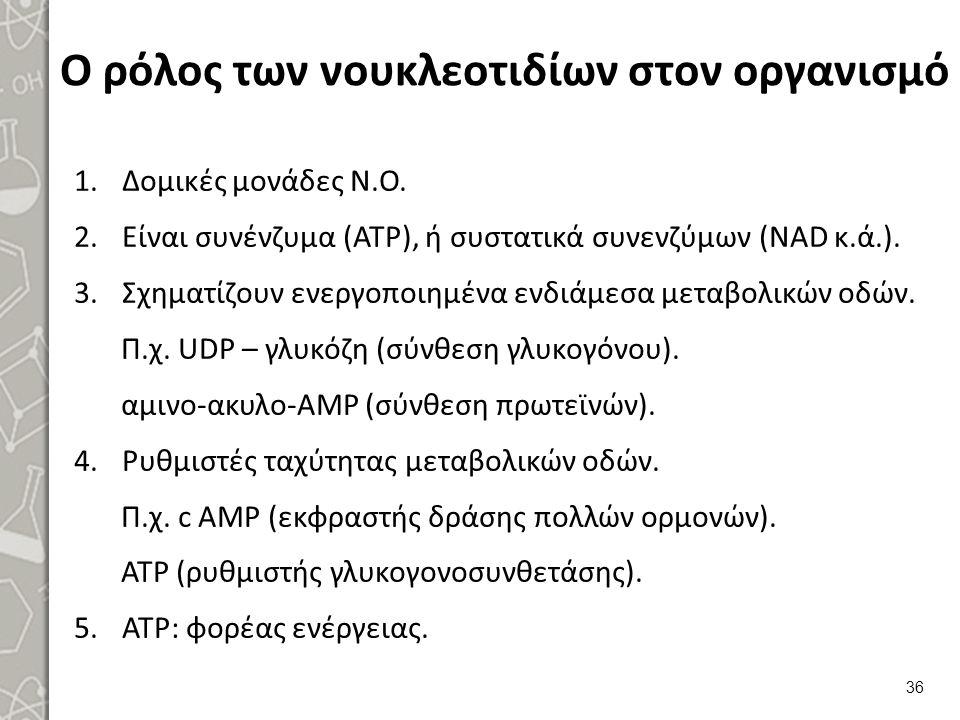 Ο ρόλος των νουκλεοτιδίων στον οργανισμό 1.Δομικές μονάδες Ν.Ο. 2.Είναι συνένζυμα (ΑΤΡ), ή συστατικά συνενζύμων (NAD κ.ά.). 3.Σχηματίζουν ενεργοποιημέ