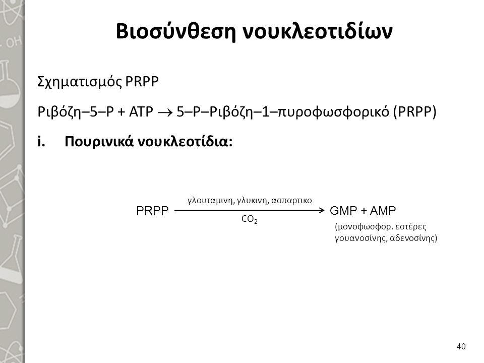 Βιοσύνθεση νουκλεοτιδίων Σχηματισμός PRPP Ριβόζη–5–Ρ + ΑΤΡ  5–Ρ–Ριβόζη–1–πυροφωσφορικό (PRPP) i.Πουρινικά νουκλεοτίδια: 40 γλουταμινη, γλυκινη, ασπαρ