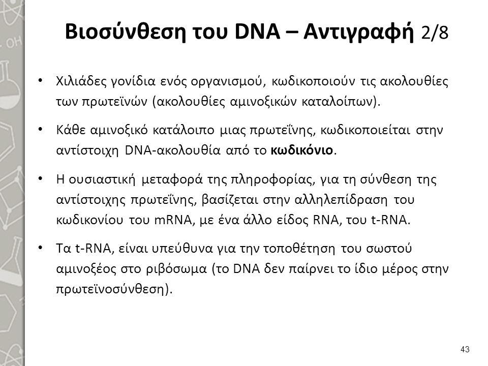 Βιοσύνθεση του DNA – Αντιγραφή 2/8 Χιλιάδες γονίδια ενός οργανισμού, κωδικοποιούν τις ακολουθίες των πρωτεϊνών (ακολουθίες αμινοξικών καταλοίπων). Κάθ