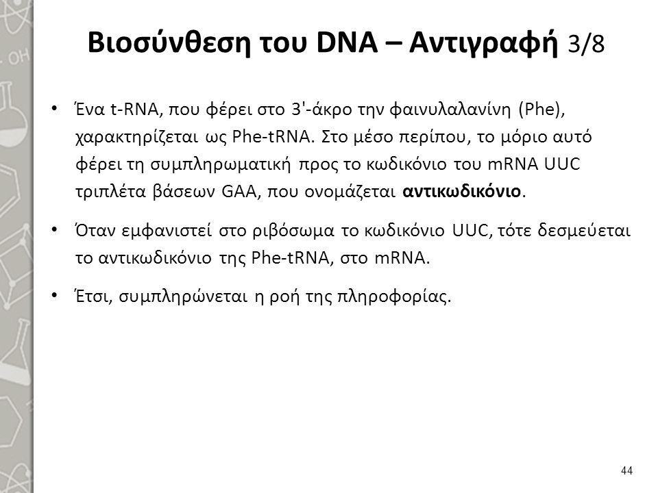 Βιοσύνθεση του DNA – Αντιγραφή 3/8 Ένα t-RNA, που φέρει στο 3'-άκρο την φαινυλαλανίνη (Phe), χαρακτηρίζεται ως Phe-tRNA. Στο μέσο περίπου, το μόριο αυ