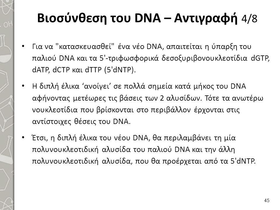 Βιοσύνθεση του DNA – Αντιγραφή 4/8 Για να