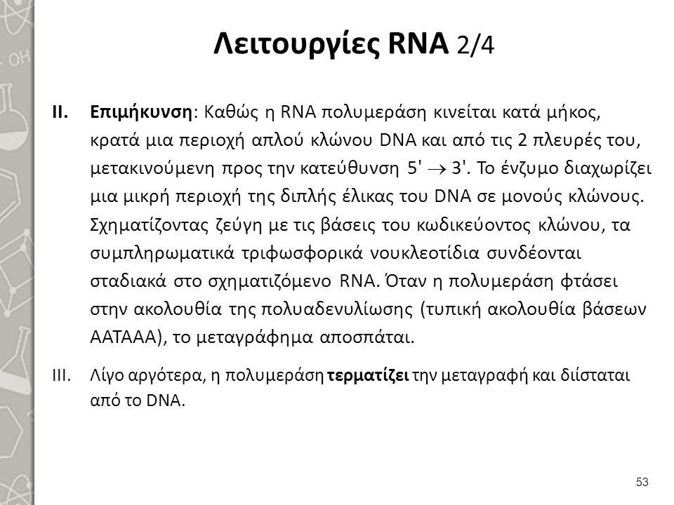 Λειτουργίες RNA 2/4 II.Επιμήκυνση: Καθώς η RNA πολυμεράση κινείται κατά μήκος, κρατά μια περιοχή απλού κλώνου DNA και από τις 2 πλευρές του, μετακινού